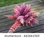 lupine  lupin. a plant of the...   Shutterstock . vector #662661565