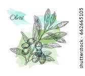vector drawn olives branch in a ... | Shutterstock .eps vector #662665105