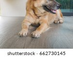mixed breed dog's paw with...   Shutterstock . vector #662730145