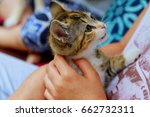 Stock photo holding a kitten on a ginger hand on a white background little kitten in the hands of a child 662732311