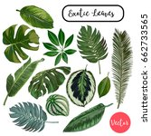 vector exotic leaves collection | Shutterstock .eps vector #662733565