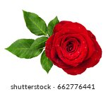 Stock photo red rose flower rosette with leaves isolated on white top view 662776441