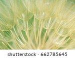 natural background in blur...   Shutterstock . vector #662785645