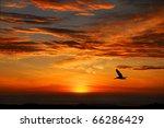Pelican Sunset  Half Moon Bay...
