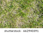patchy grass | Shutterstock . vector #662940391