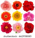 flower head. rose  sunflower ... | Shutterstock . vector #662958085