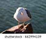 Seagull On Morro Bay Breakwate...
