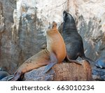 California Sea Lion Couple On...
