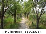 A Path Among The Trees In The...