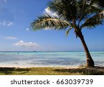 Coconut Tree By The Beach A...