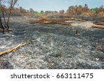 burnt agricultural field. the... | Shutterstock . vector #663111475