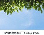 green leaves and blue sky... | Shutterstock . vector #663111931