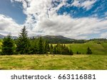 Conifer forest on a hill on a bright sunny day. blue sky with clouds in summer countryside landscape - stock photo