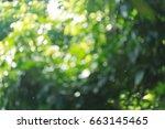 Green Bokeh Light Through Tree...