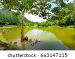 view of the beautiful clear... | Shutterstock . vector #663147115