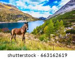 well groomed horse calmly rest... | Shutterstock . vector #663162619