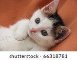 Stock photo very beautiful kitten 66318781