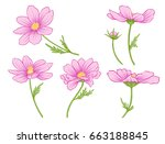cosmos flowers. set of colored...   Shutterstock .eps vector #663188845