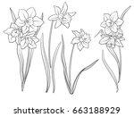 narcissi flowers. set of...   Shutterstock .eps vector #663188929