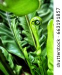 fern is growing up at garden | Shutterstock . vector #663191857
