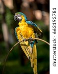 colourful parrots bird sitting... | Shutterstock . vector #663192781