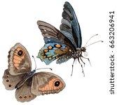 watercolor butterfly tender... | Shutterstock . vector #663206941