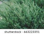 beautiful green floral...   Shutterstock . vector #663223351