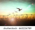 Small photo of Freedom concept: Silhouette of bird flying and barbed wire at sunset background