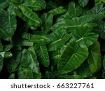 heart shaped green leaves... | Shutterstock . vector #663227761