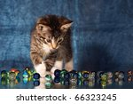 Stock photo small kitten playing with glass marbles 66323245