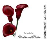 Realistic Dark Red Calla Lily....