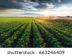 irrigation system watering a... | Shutterstock . vector #663246409
