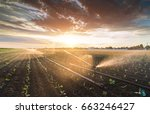 irrigation system watering a... | Shutterstock . vector #663246427