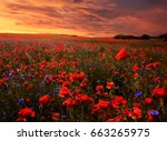 beautiful poppy seed field at... | Shutterstock . vector #663265975