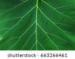 leave texture   Shutterstock . vector #663266461