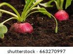 close up of an organic  healthy ...   Shutterstock . vector #663270997