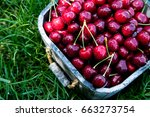 cherry basket. cherry tree... | Shutterstock . vector #663273754