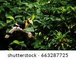 Yellow Billed Hornbill  Great...