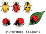 ladybugs over white background. ... | Shutterstock . vector #66330049