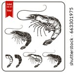 various type of shrimps and... | Shutterstock . vector #663301975