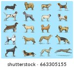 dog breeds engraved  hand drawn ... | Shutterstock .eps vector #663305155