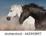 Stock photo black and white horse portrait in motion 663343897