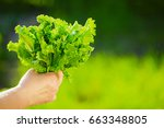 woman picking fresh salad from... | Shutterstock . vector #663348805