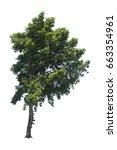 green tree single isolated on...   Shutterstock . vector #663354961