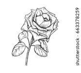 sketch rose blossom flower with ... | Shutterstock .eps vector #663378259