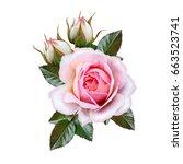 flower arrangement of pink... | Shutterstock . vector #663523741