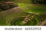 terraces of cultivation in the... | Shutterstock . vector #663525925