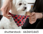 putting on dog collar with... | Shutterstock . vector #663641665