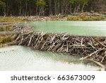 Beaver Dam   Tierra Del Fuego ...