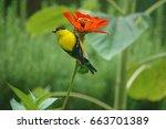 ...   Shutterstock . vector #663701389